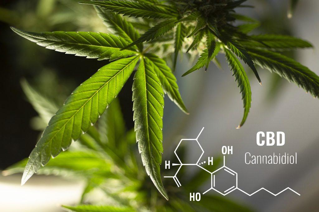 Co zawiera liquid - CBD i THC