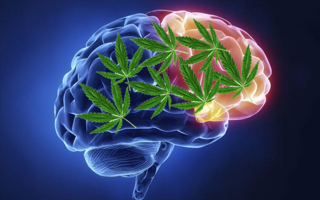 palenie haszyszu a badania i zdrowie