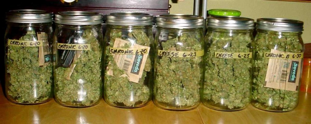wysuszona marihuana