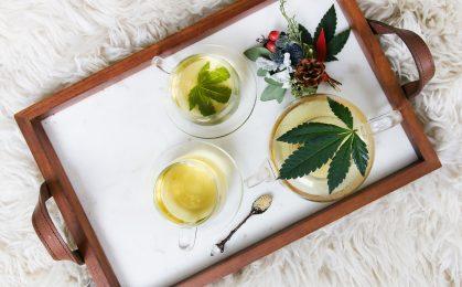 filiżanka herbata konopna