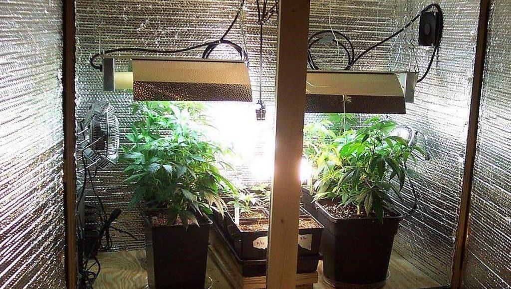 Marihuana w growboxie - lampy wentylatory
