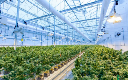 Medyczna marihuana - laboratorium