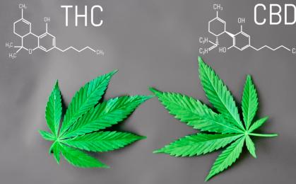 CBD i THC - różnice