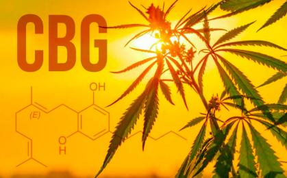 Czym jest olej CBG
