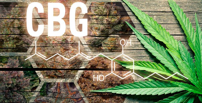 Właściwości i działanie oleju CBG